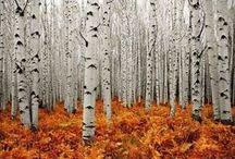 decor d'automne