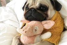 a pug thing