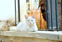 Hep Aklınızdaki Tatil, Kıbrıs