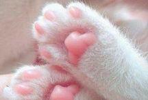 Furry cuteness | Borzas aranyosságok / Find your daily dose of awwwww here. | A napi cukiságdózis itt található.