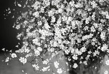 Растения, макро: фотоидеи / В этой галерее собраны лучшие фотографии в жанре макро и флоры наших учеников, показанные ими на форуме, в домашних заданиях и галерее фотошколы. Снимки тщательно отбираются Еленой Счастливой и показывают нам результаты обучения, талант учеников и выпускников нашей фотошколы. Вдохновляйтесь и черпайте идеи!!!