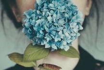[ flowers &  plants ] ❤ / {Fiori} / {Piante}