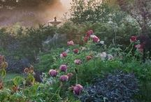 Cottage Garden Fancies / by Gigi Thibodeau