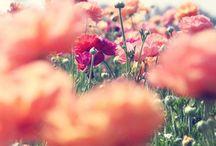 •i like nature's beauty• / by Naomi McCord
