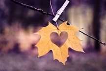 autumnal... / hate halloween....LOVe LoVE LOvE Autumn...