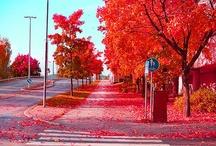 Vacances d'Automne / Quoi de plus jolie que les couleurs de l'automne ? Les feuilles qui tombent, les arbres aux couleurs chatoyantes...