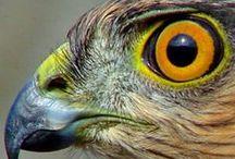 This Is Sight / #Nature #Phenomena #SenseOfSight / by Nick Conenna