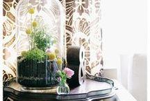 Plants & Gardening / by Sierra Benson