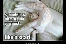 silly cat / silly cats in silly pictures with silly sayings!!!