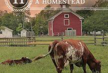 Homesteading / by Regina P.