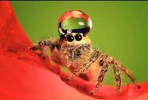 ~*~ Photography ~ Spiders ~ Arachnids / Photos of Spiders & Arachnids of all types. EEEK!!!   / by Kellena M Harrington