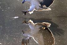 ~*~ Photography ~ Reflections / Photography of Reflections. Beautiful photos. Enjoy! / by Kellena M Harrington