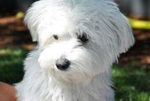 Catioros Fofíneos / fotos de cachorrinho cuti cuti que dá vontade de apertar :3