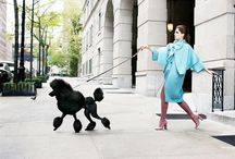 Dogs + edito = ❤️