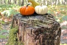 • Fall for Autumn • / Lovely autumn/fall pictures • Jolies photos d'automne