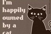 CATS! / by Carol Custer