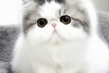 Cute cats / Cats