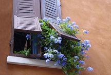 Doors and windows,cats sometimes included. / Architectural and decorative doors and windows.