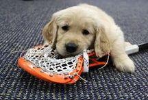 LAX / LACROSSE / Lacrosse