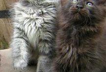 Kitten, cats, kočičky, mourci a zrzouni