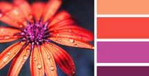 What Colour Best Suits My Business? / Colour Inspiration