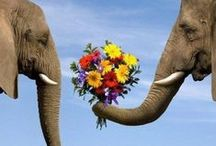 Things We Love: Animals / Our love of nature goes beyond flowers; the animals in all their glory and splendid beauty