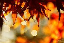 Seasonal kimono: autumn / September, October, November