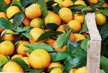 L'oranger / Délices#maroc#sucré#vitamines