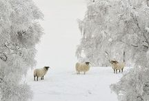 ♥ Winter / by Jane down the lane
