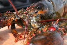 { lobster recipes } / lobster recipes