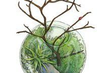 Terrarium Illustrations / nature illustrations from various artists