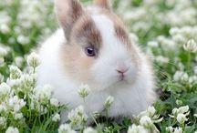 <3 Bunny