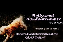 Hollywood Honden Services, south Holland / Dog services, south holland. groomer, pet sitter, medical dog daycare, Pet Taxi, Pet to vet, and more.  http://hollywoodhonden.blogspot.com