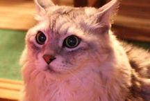 Naze Cat