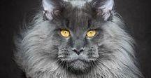 Котейки (cats) / Фотографии кошек и котов
