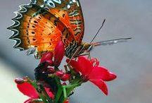 Grandioso Deus / Natureza linda