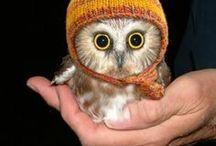 owl / Snitzel