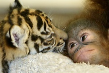 "Baby animals / Who can resist adorable baby animals? Images to make you say ""Awww!"""