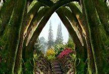 Secret Garden / by Valerie Sue Nielsen