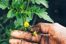 Green Thumb / Gardening tips and tricks for our very own Sherwood Forest Farms garden.