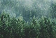 Evergreen / Our evergreens are 100% guaranteed to be fresh! Sherwood Forest Farms strives to provide our customers with evergreens that are beautifully fresh and of quality construction. Here is some tree inspiration for you!