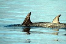 Knoydart wildlife / Who we share Knoydart with.....naturally :)