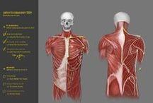 [Study] Anatomy