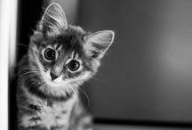 Gatitos ( =ω=)..nyaa