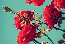 Floral/flower