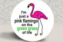 Flamingos :) / by Sabrina Morris