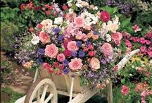Gardening / For the love of gardening. / by Linda Broadhurst