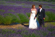 Lavender Farm Weddings / Imagine being surrounded by fields and fields of vibrant purple flowers in sweeping rows extending to expansive pastoral, lake and wooded vistas… sunshine warms gentle breezes enveloping you with soft, sweet fragrance… can you imagine your photos taken in such a picturesque locale? Beautiful! For more details & wedding offerings at Pelindaba Lavender Farm : http://www.pelindabalavender.com/weddings-and-events-a/281.htm