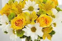 Fresh Flowers / Find fresh flower products from India. We are online flowers Shop for Roses, Flower Arrangement, Flowers Bouquet, Bunches, Flowers Basket to gift on special occassions.