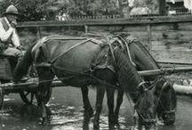 Transylvanian horse / Transylvanian horse, székely ló